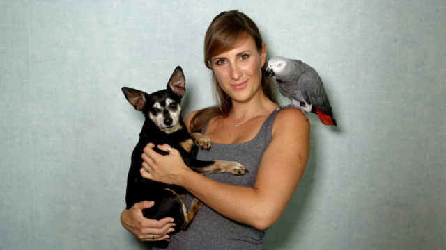 CLOSE UP: Portrait of African grey parrot sitting on shoulder, girl and pet dog video