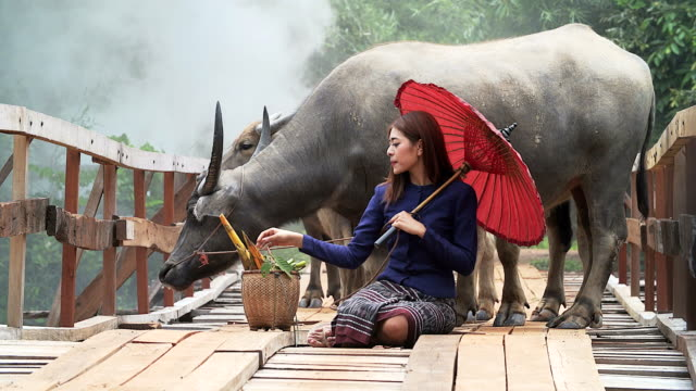 Portrait of Asian woman wearing Thai traditional costume sitting on the wooden bridge with the buffalo in background video