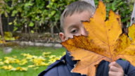Portrait of boy playing, hiding with leaves at the autumn park. video