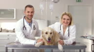 Portrait Of Friendly Veterinarians video