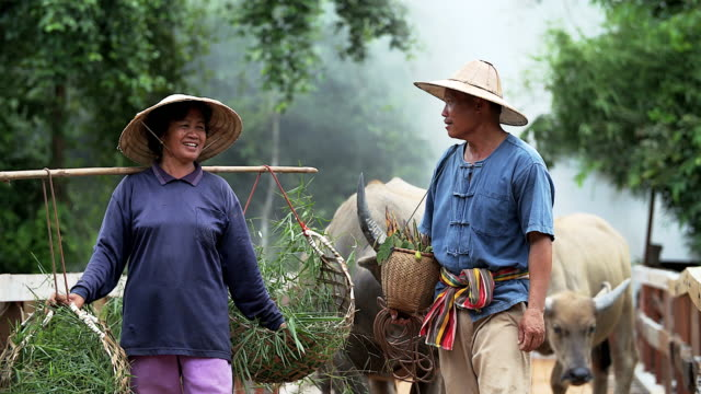 4K: Portrait of happy couple farmer in front of their buffaloes in countryside. video