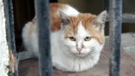 HD: Portrait of head of street cat behind cage video