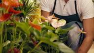 portrait of man in flower shop arranging plant video