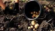 Potato. video