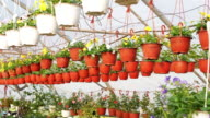 Potted flowers in plant nursery video