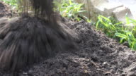 pour soil in vegetable garden video