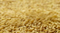 Pouring barley grains video