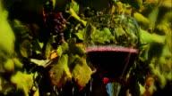 Pouring Vino video