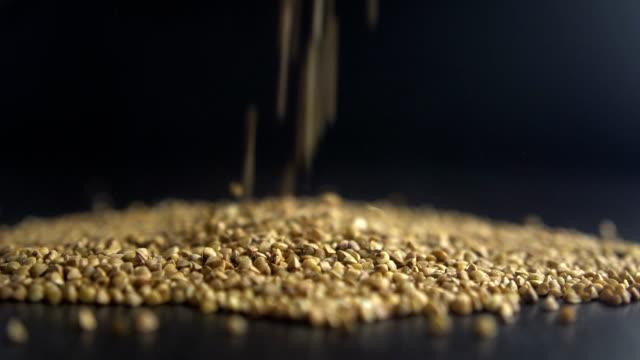 pours buckwheat grain video