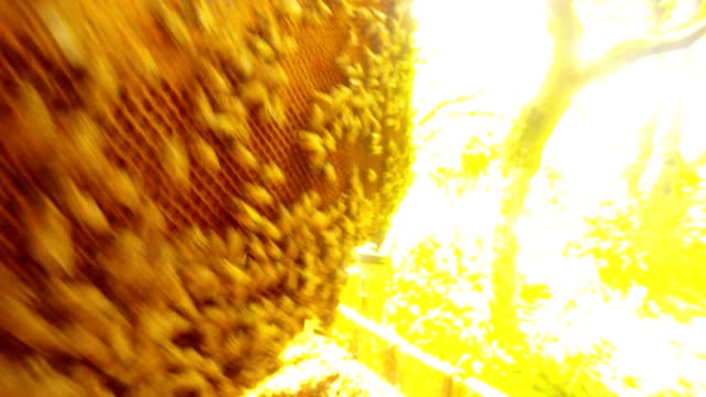 Pov Bee Flies Closely to Hiver Examines Frame For Honeycombs Sun Looks in Camera video
