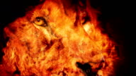 Powerful Lion Face In Fire Abstract video