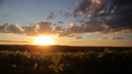pôr do sol em lavoura de soja video