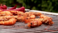 Prawns with chillie seasoning cooking outdoors on a barbecue grill video
