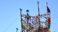 Prayer Flags on Pole with Crows in Leh Ladakh, Northern India video
