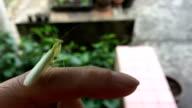 Praying Mantis video
