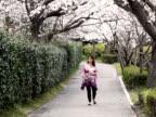 PAL: Pregnant woman walking under sakura (video) video