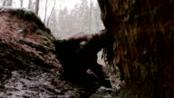 Prehistoric caveman washes in his cave on a background of winter forest video