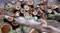 Preparation of firewood video