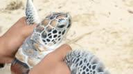 Preparing to release sea turtles video