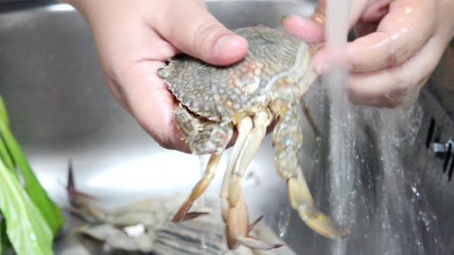 PreparingCrab video
