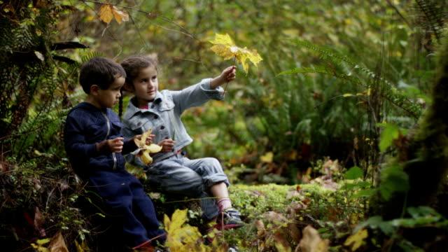 Preschoolers Exploring the Woods video