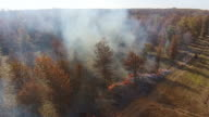Prescribed fire in the woods seen from the air video