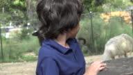 Preteen Hispanic Boy at Zoo video