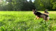 Pretty funny dog. video