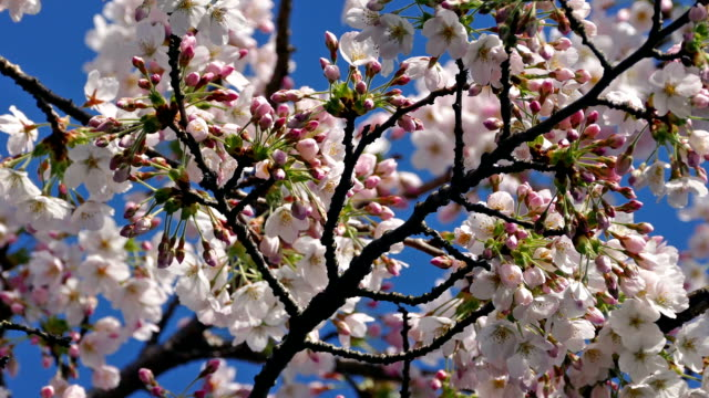 Pretty Pink Flower Blossoms In Spring video