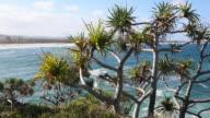 Pristine Clean Beach at Cabarita, NSW, Australia video