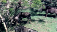 Private Game Farm  - Aerial View - KwaZulu-Natal,  uThukela District Municipality,  Okhahlamba,  South Africa video