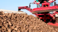 Processing and loading of sugar beet video