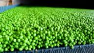 Processing green peas video