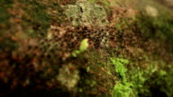 Processional Termites in the forest, slow motion video