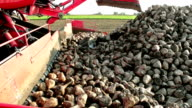 Production and loading of sugar beet video
