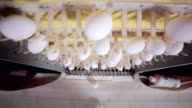 Production of eggs in huge the poultry farm video