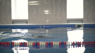 Professional swimmer swimming a breaststroke in light pool, camera follows him on a pool's border. video