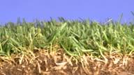 profile of grass video
