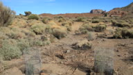 Protection of plants in Teide National Park. Tenerife, Spain. video
