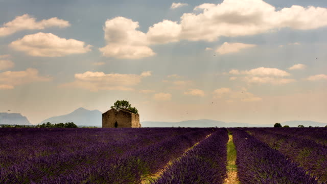 Provence summer landscape, lavender field and ruined house time lapse video