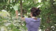 Pruning video