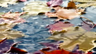 Puddle with Bright Autumn Leaves video