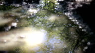 Puddle with mud and trees reflected in the water video