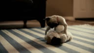 Pug Puppy Play Slow Motion video