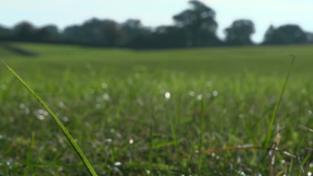 Pull focus shot of a healthy grass field in spring video