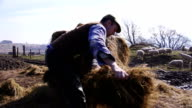 Pulling Apart a Silage Bale video