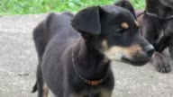 Puppies, Dogs, Canines, Pets, Animals video