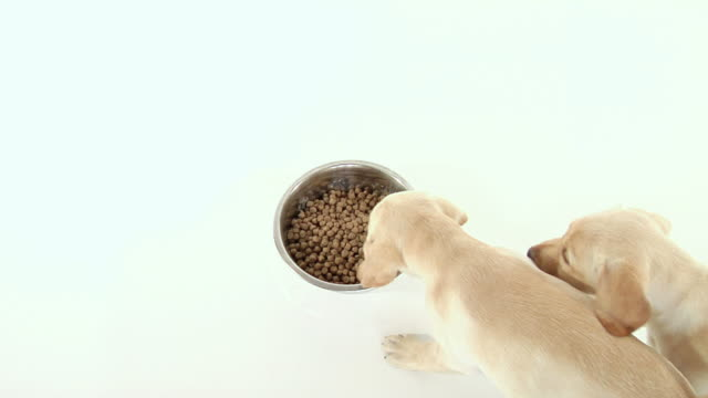 Puppies Eating video
