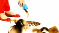 Puppy beagle eat dry food and takes it from each other video