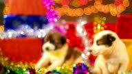 Puppy christmas Series video